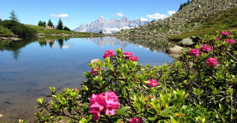 Bergsee mit Blumen